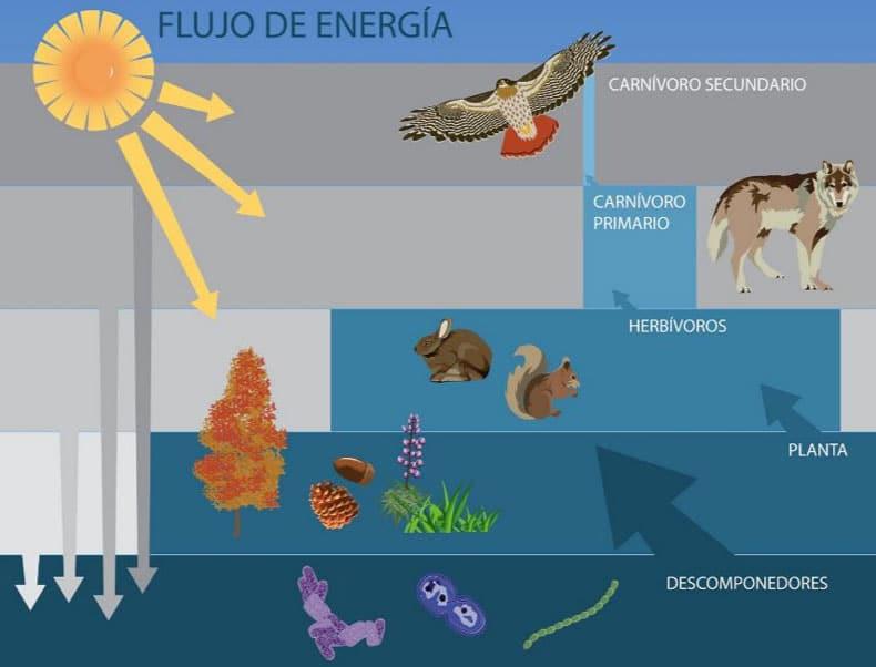 Ecosistemas 101 ejemplos y qu es un ecosistema  OVACEN