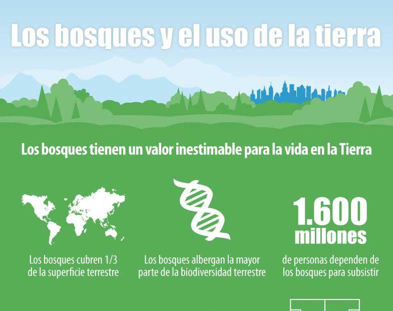 infografia bosques y tierra
