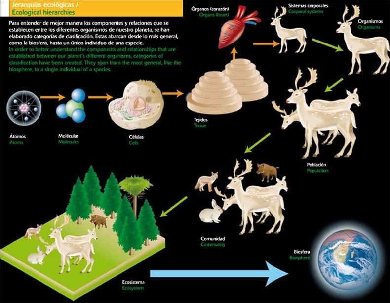 clases organismo planeta