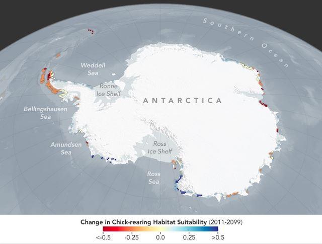 ecosistemas pinguinos