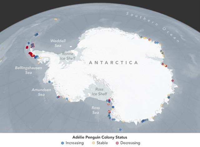 habitat pinguino