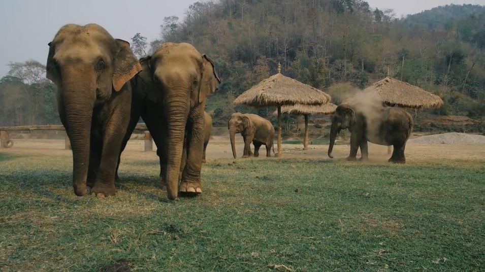 Elefantes-en-africa