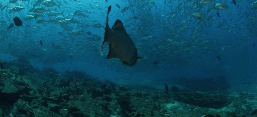 oceanos y vida