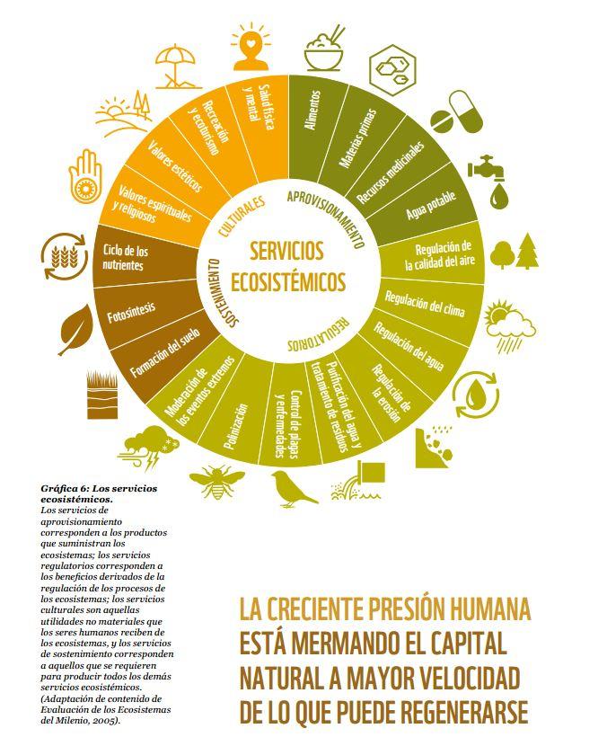 los servicios ecosistemicos