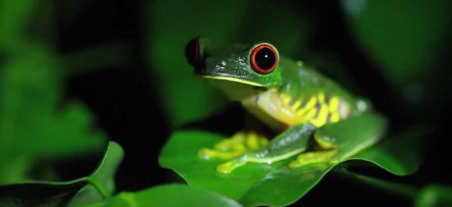 animales en las selvas tropicales