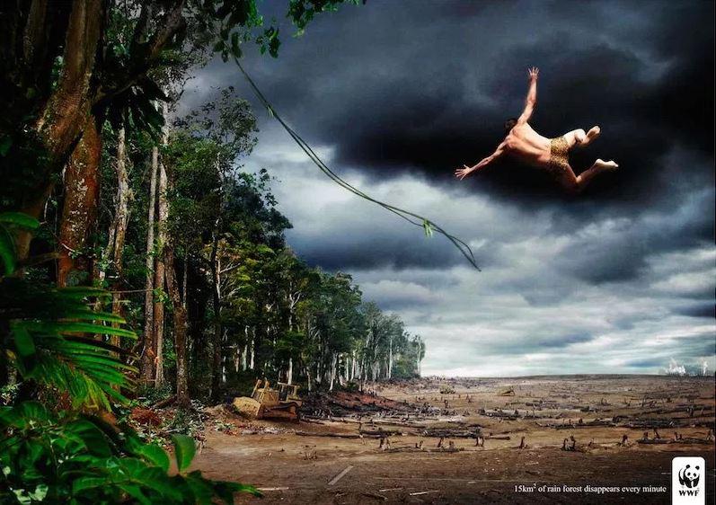 destruccion de la selva tropical