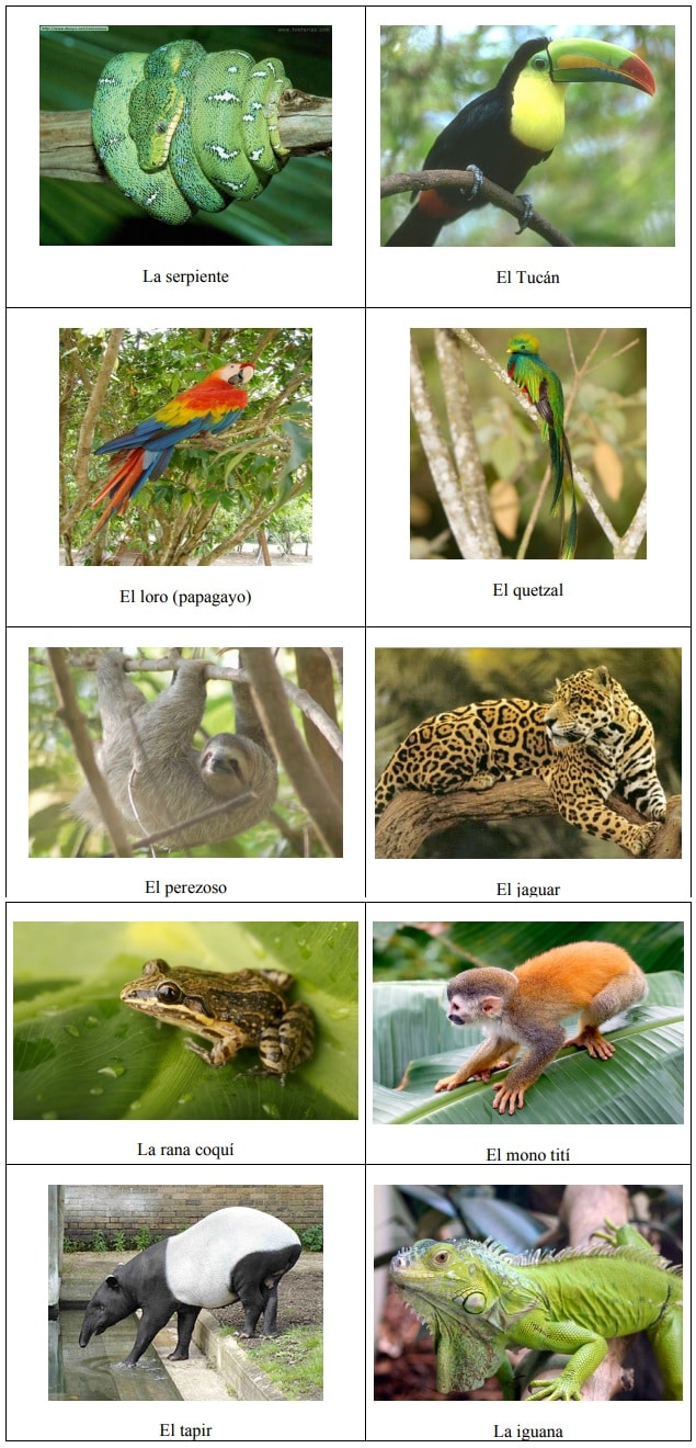 ejemplo animales selva tropical