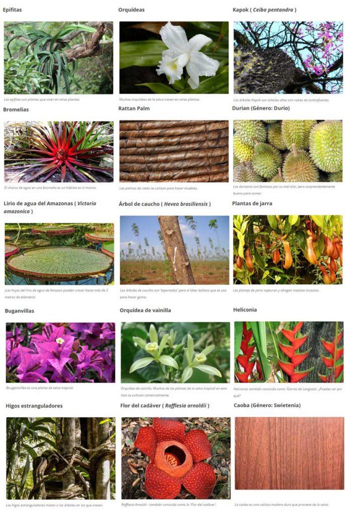 ejemplos de plantas selva tropical