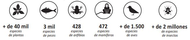 estimación animales selva