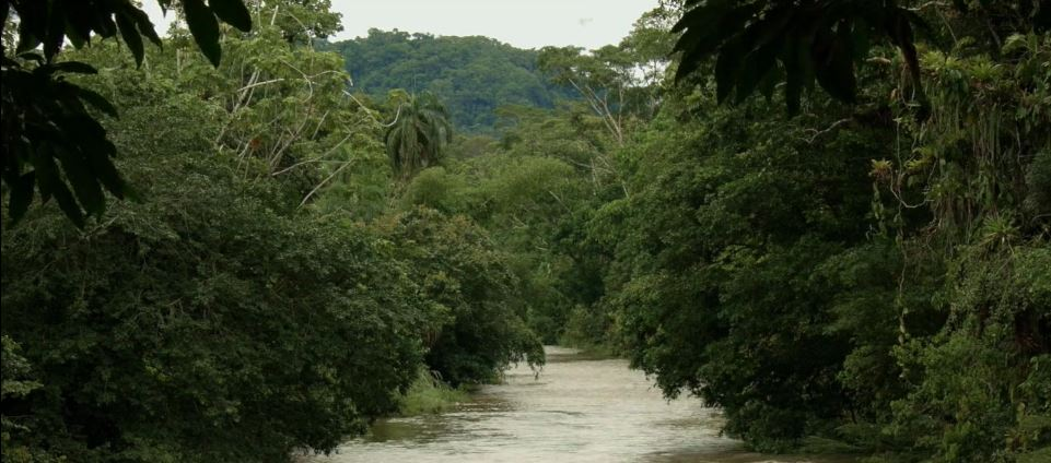 Selvas-tropicales