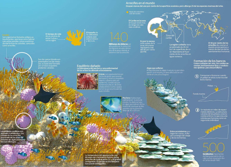 Biodiversidad marina - Arrecifes