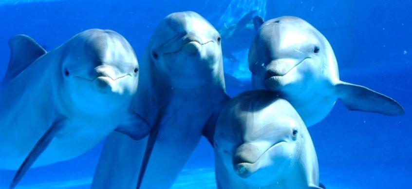 sonido de los delfines