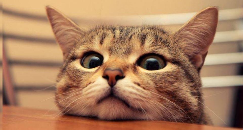 sexto sentido de los gatos