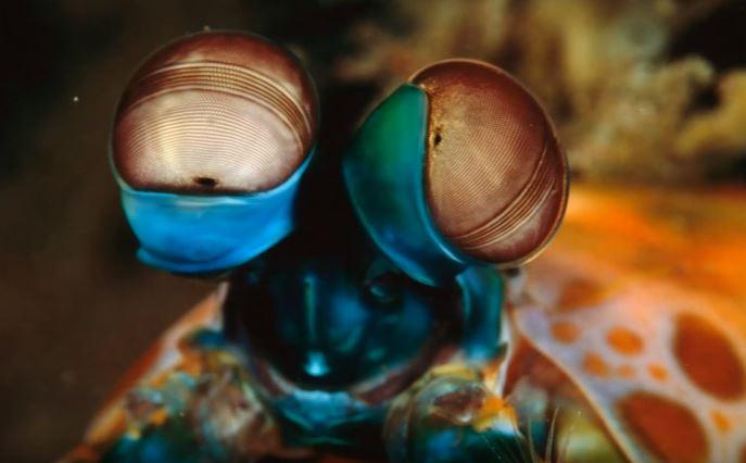 como ven los insector