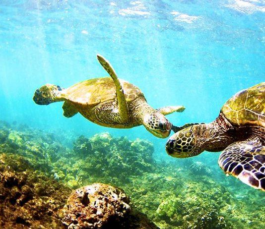 acidificacion de los oceanos