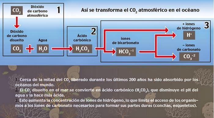 La Acidificación De Los Océanos Causas Y Efectos Ovacen