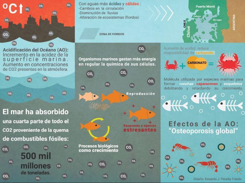 impacto de la acidificacion oceanos