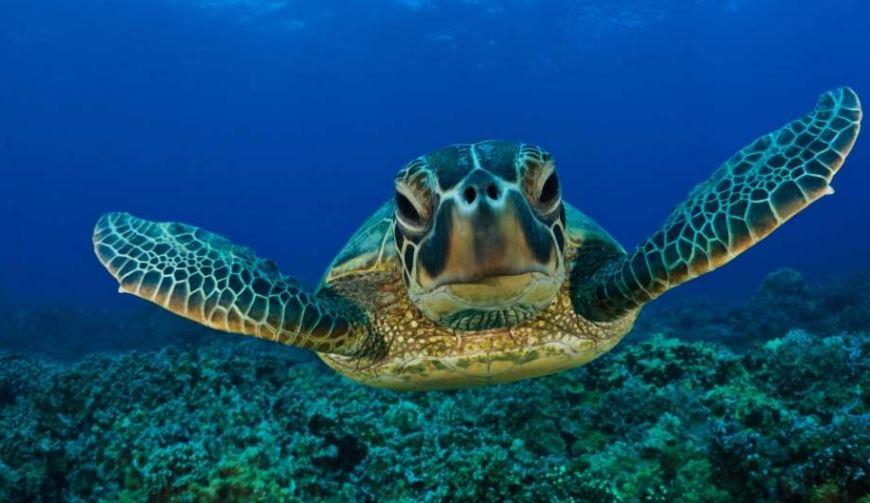 animales de ecosistemas acuáticos