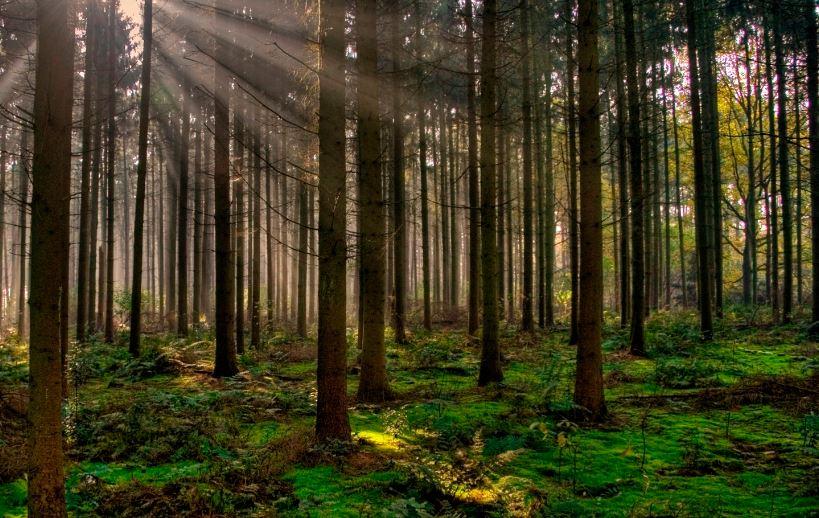 Resultado de imagen de fotos de bosques