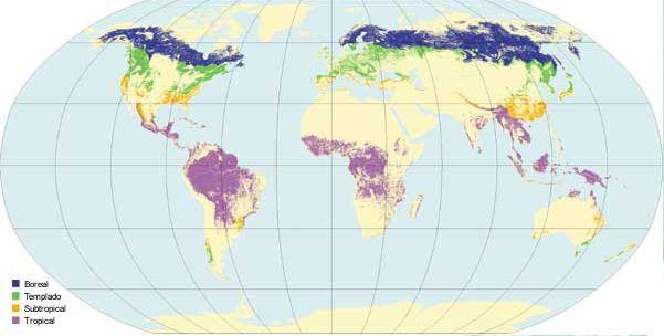 bosques del mundo