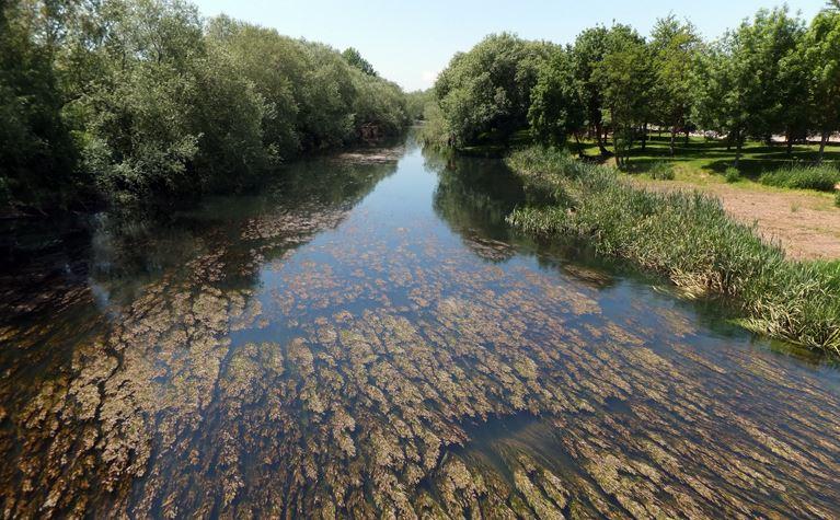ecosistema de agua dulce