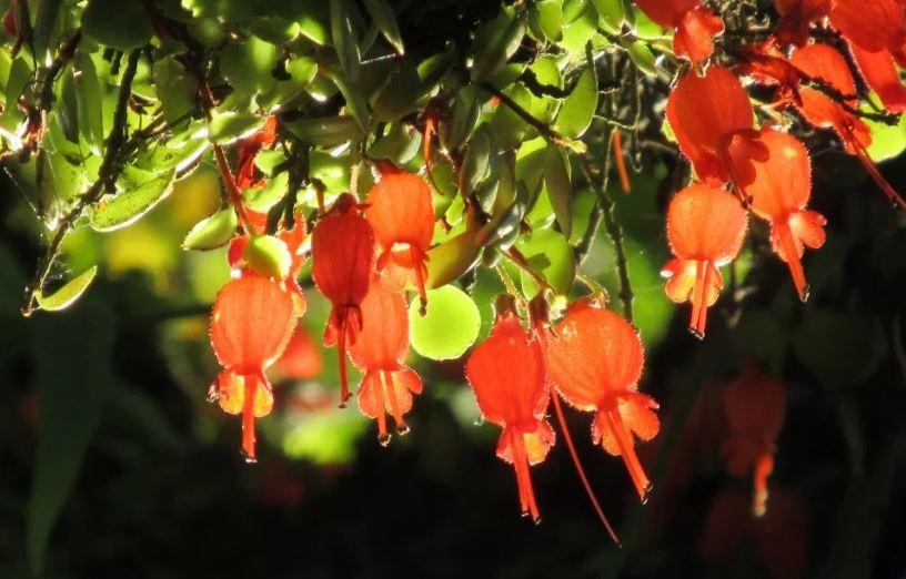 flores de la selva