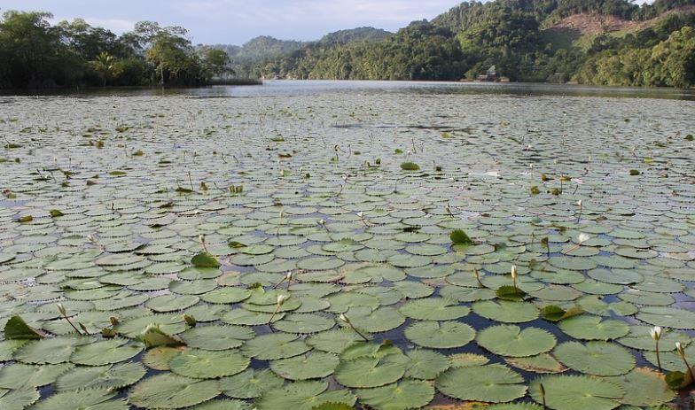 Ecosistemas Acuáticos Tipos Flora Fauna Y Características Ovacen