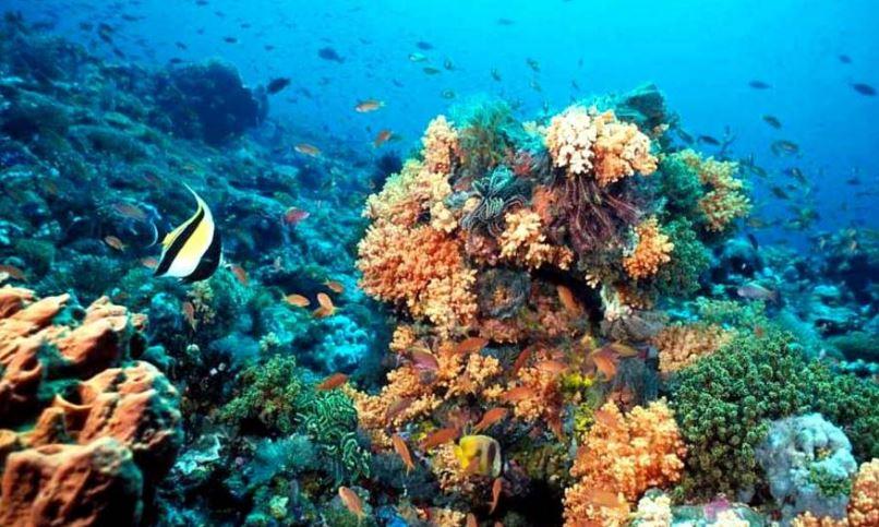 flora marina