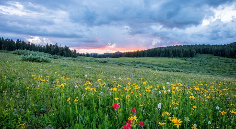 flora de la pradera