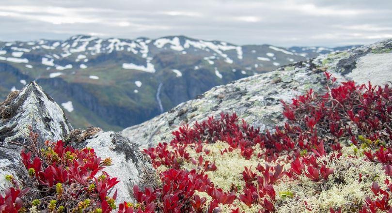 flora de la tundra
