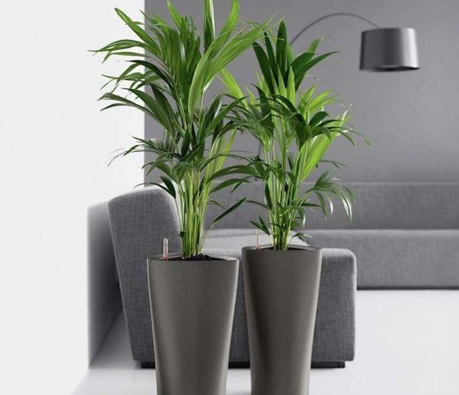 Qu plantas hay que tener en casa ovacen for Plantas artificiales para interiores
