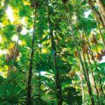 bioma selva
