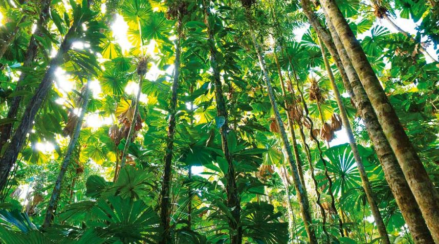 Las Plantas En La Selva Tropical Y Su Fauna