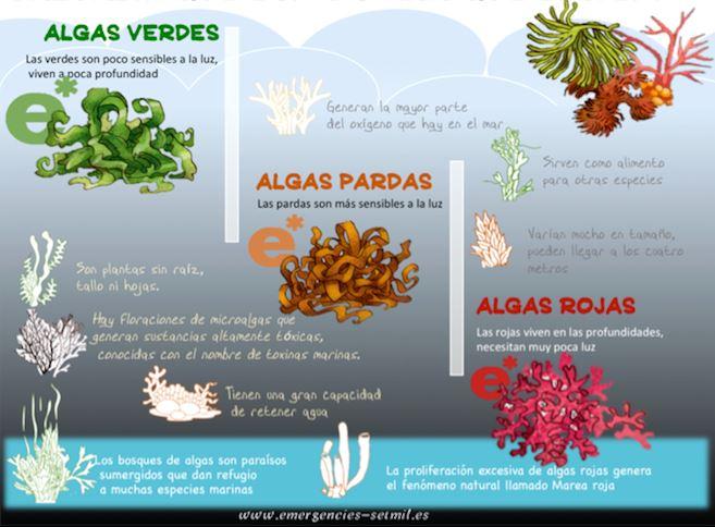 tipos de algas en el mar