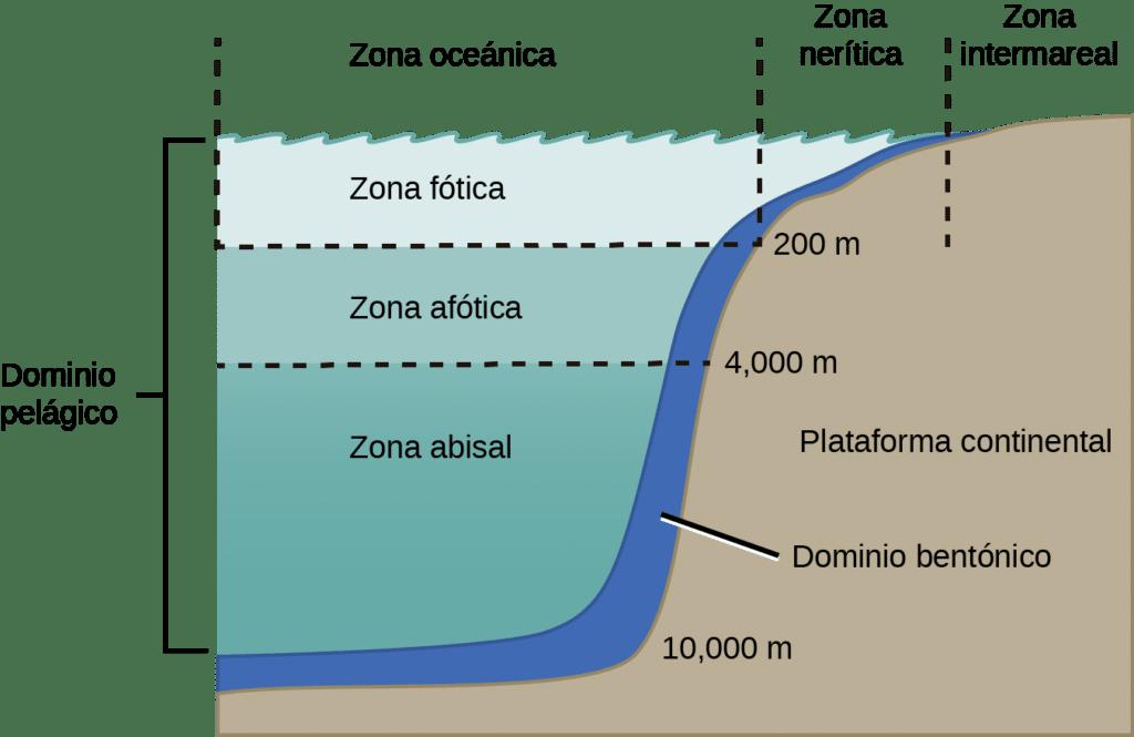 tipos ecosistemas marinos