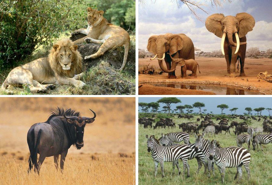 animales en la sabana
