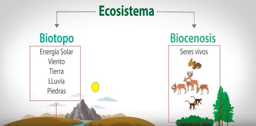 biocenosis y biotopo