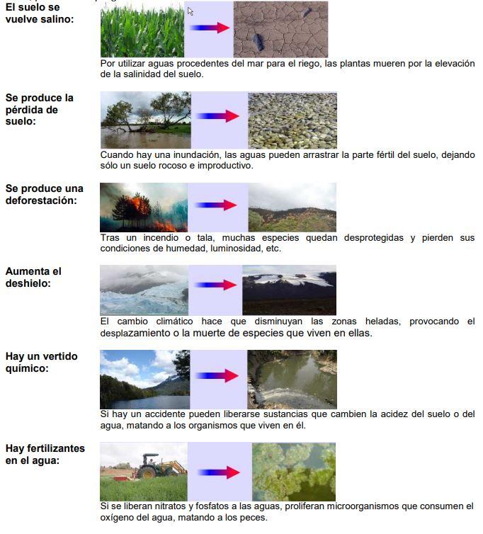 biotopo y medio ambiente