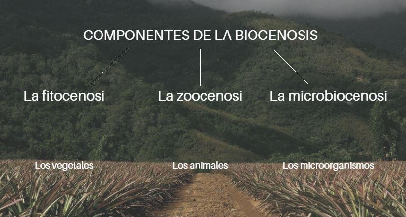 componentes de la biocenosis