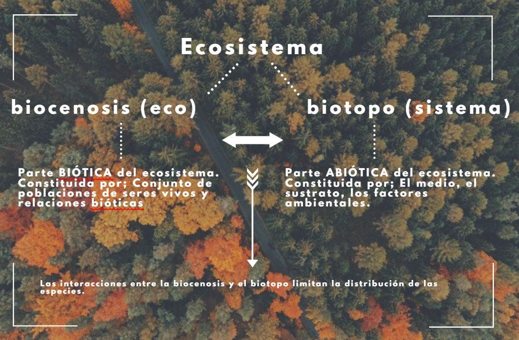 concepto de biocenosis