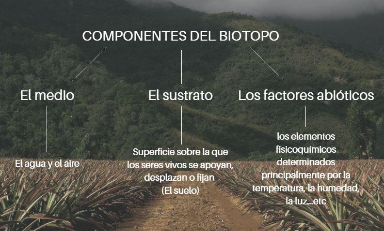 elementos biotopo