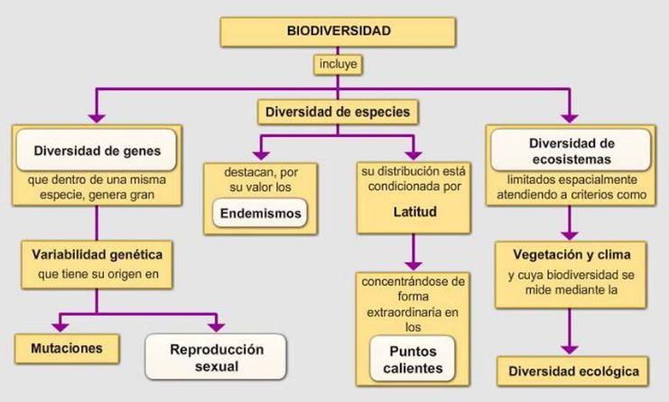 esquema de la biodiversidad