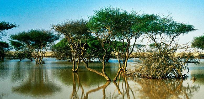 humedales y manglares