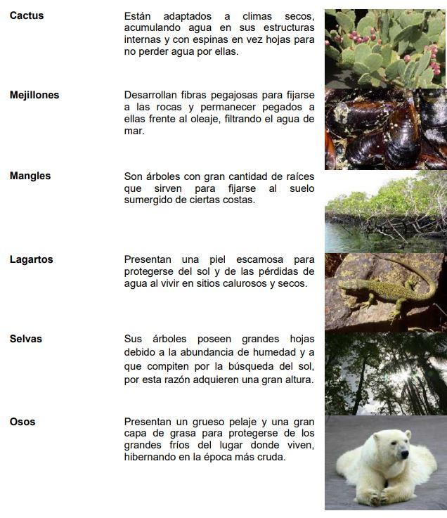 influencia biotopo en los ecosistemas