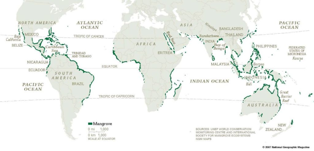 mapa principales manglares tierra