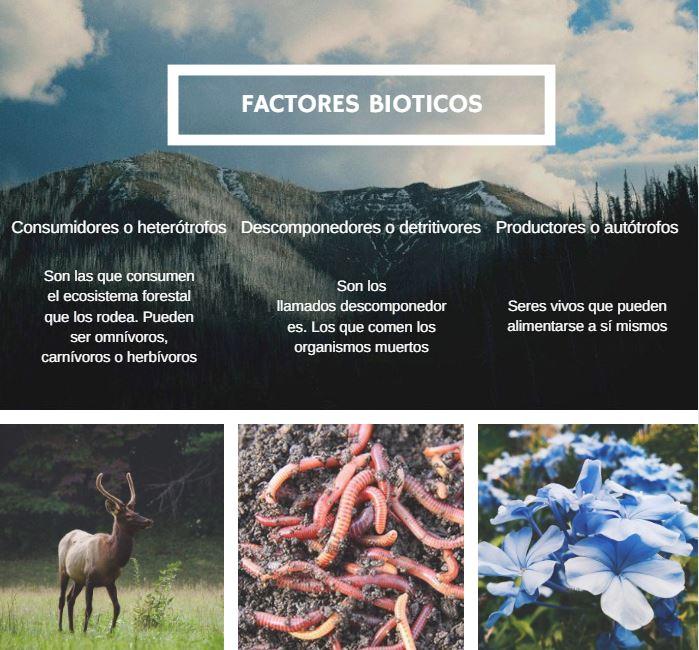 seres bioticos de un ecosistema