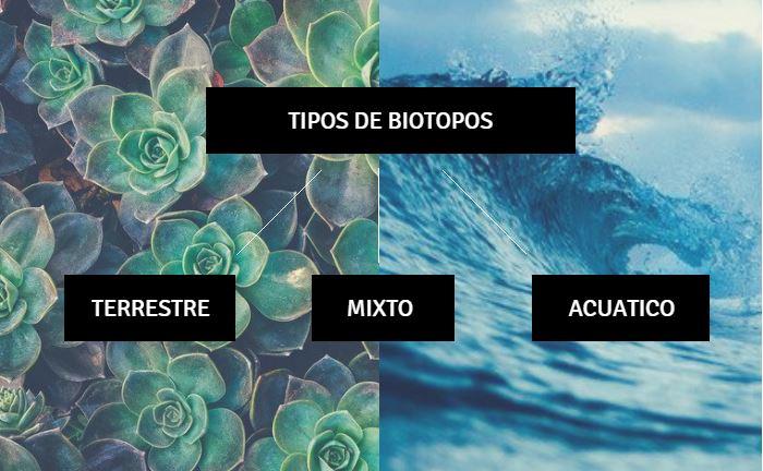 tipos de biotopos