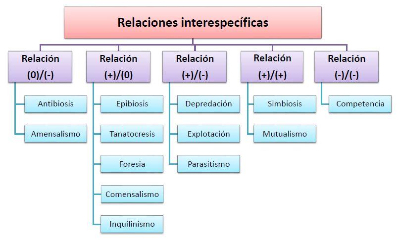 tipos relaciones interespecificas