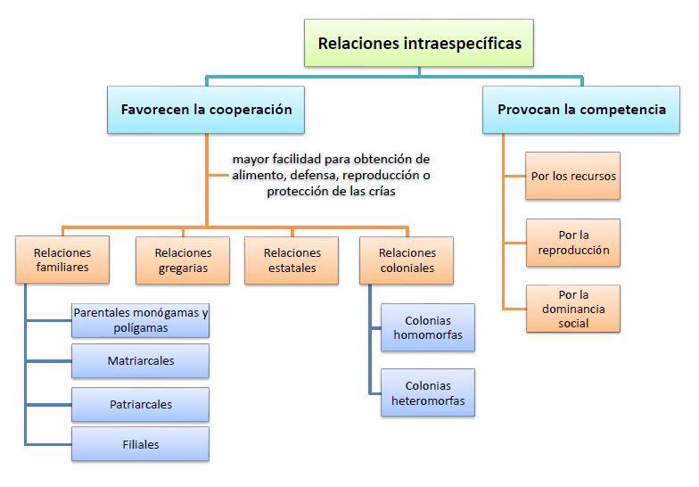 tipos de relaciones intraespecificas