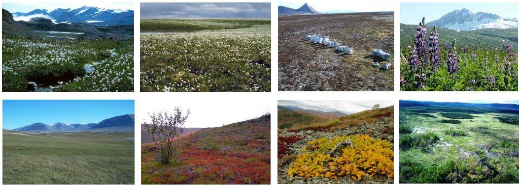 vegetación de la tundra